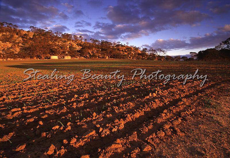 Ploughed fields, WA