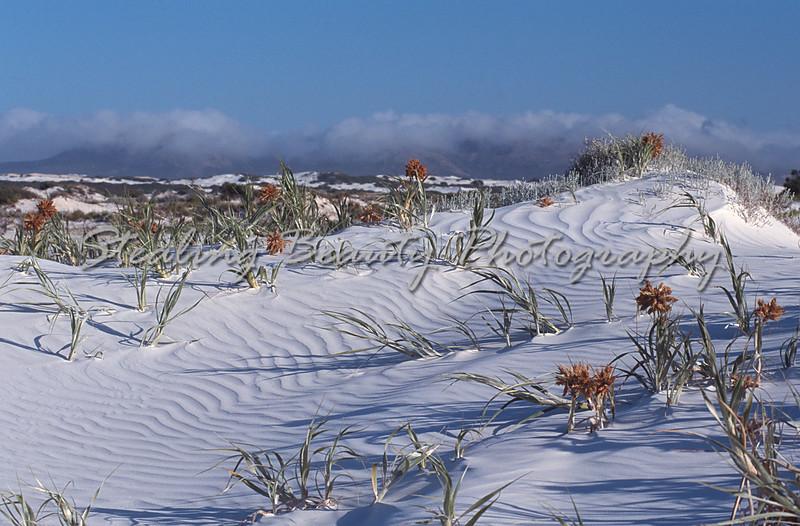 Cape Arid dunes