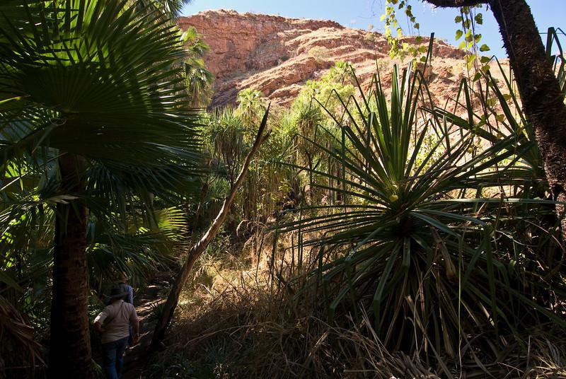 Path to Zebedee Springs, El Questro Station