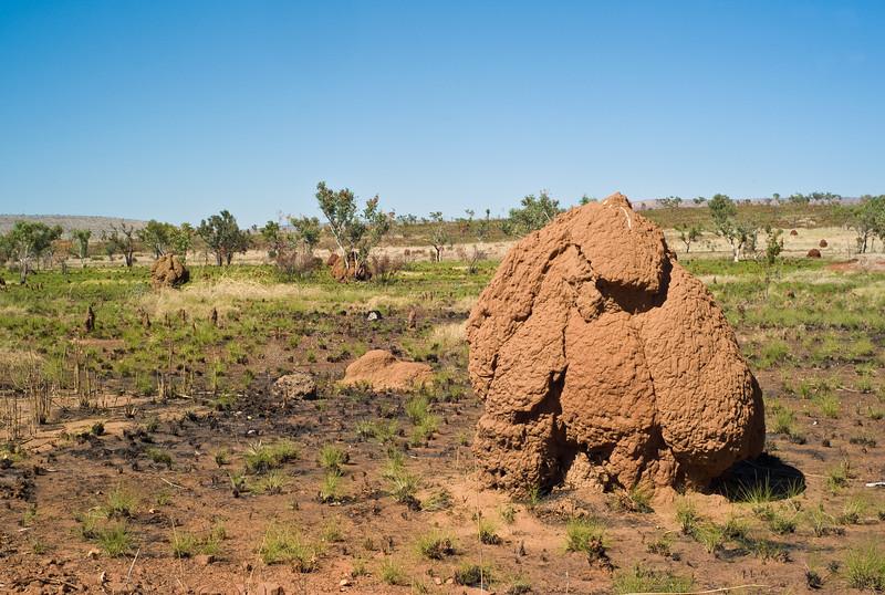 Termite mound on Mornington Station.