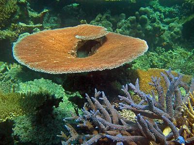 Scuba diving at Great Barrier reef - dive site Acropolis