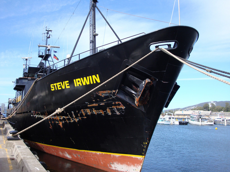 "Steve Irwin, <a href=""http://www.seashepherd.org/"">Sea Shepherd</a> ship."