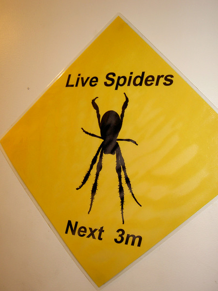 Free-range spider room