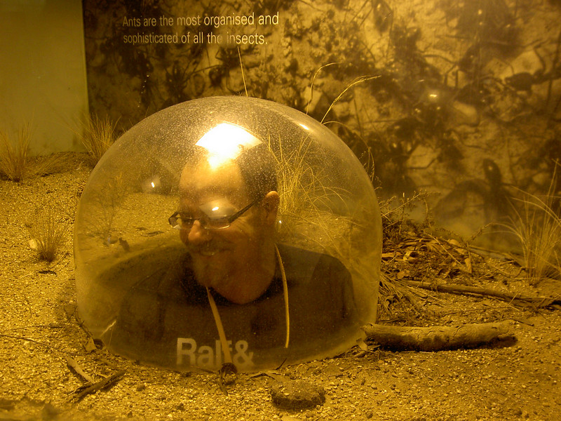 Inside the ant dome