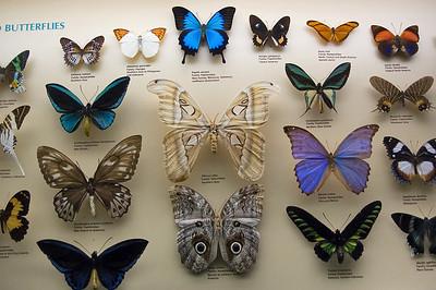 Butterfly collection Australian Museum Sydney, NSW Australia - 20 Jun 2006