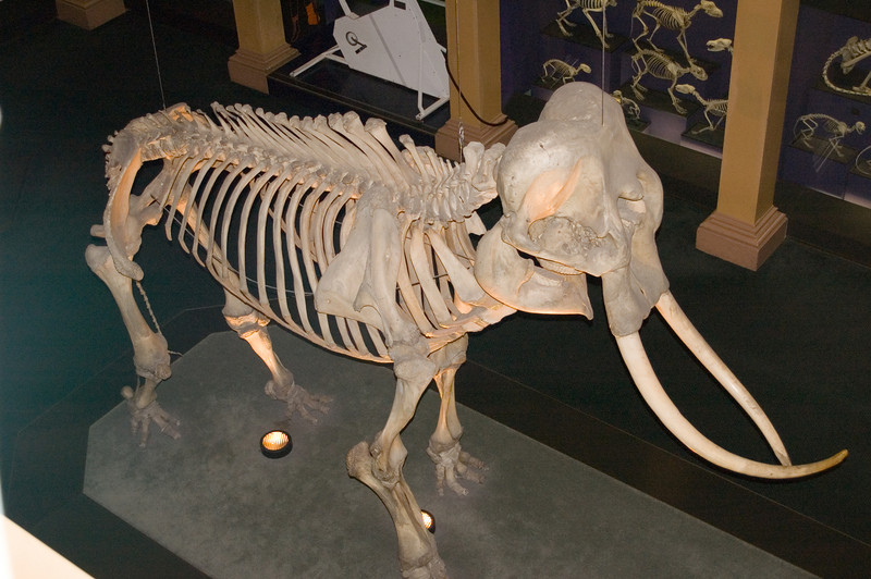 Skeleton collection Australian Museum Sydney, NSW Australia - 20 Jun 2006