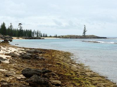 Monday - Looking back from Kingston Pier towards Point Hunter (on right with sole Norfolk Pine) and Emily Bay.