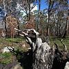 Black Swamp National Park-NSW-Australia