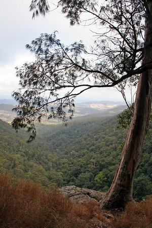 Looking down into the valley on an early morning walk through the National Park, the colour and light reminds me of a McCubbin painting