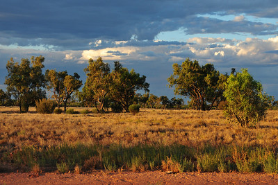 Driving from Alice Springs to Kings Canyon