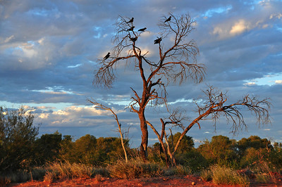 Northern Territory (2012)