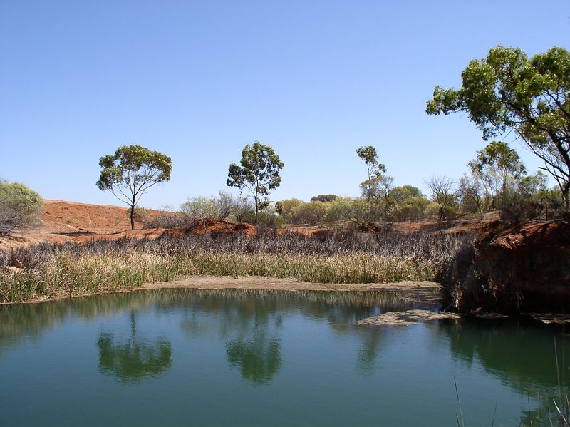 A Billabong (water hole)