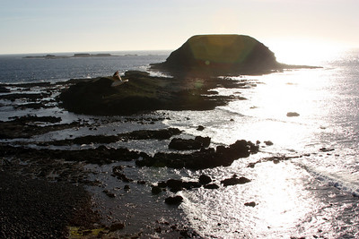 Phillips Island & the Nobbies