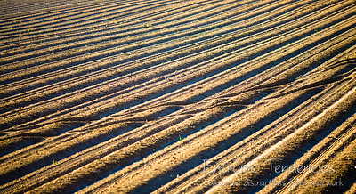 Furrows Date: 16 August 2009 © Copyright 2009 Barrie Spence
