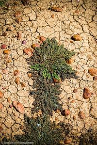 Gibber rocks and Outback soil