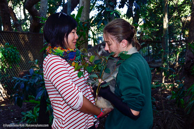 Koalas at Lone Pine Koala Sanctuary
