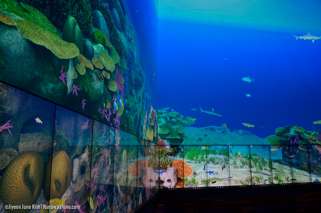 The Virtual Reef at the Cube - provides an immersive, simulated underwater experience that invites users to engage and learn about the Great Barrier Reef's unique ecosystem
