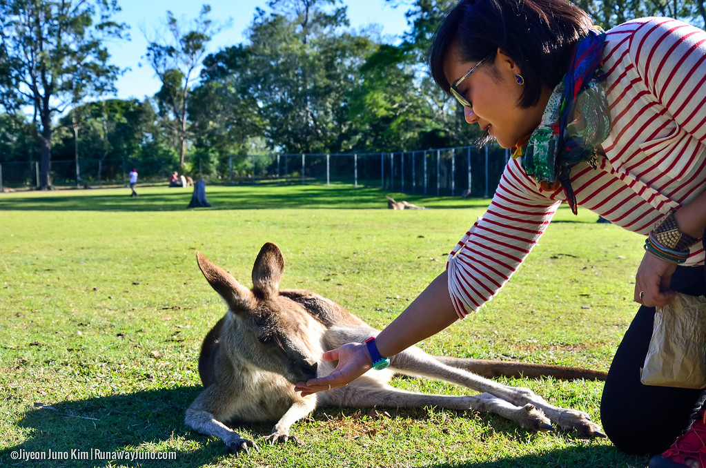 Meeting Koalas at the Lone Pine Koala Sanctuary in Brisbane, Queensland, Australia.