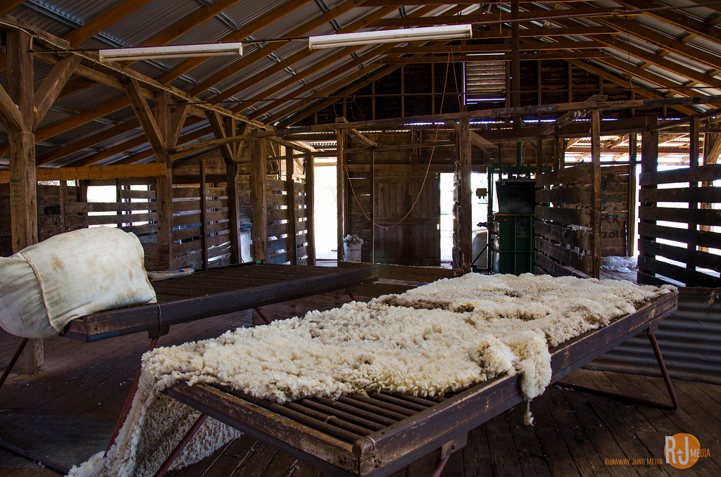 Shearing shed at the Chalotte Plains