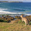 2016-03-12_0875_Coff's_Moonee Beach Reserve.JPG<br /> <br /> Surf check!