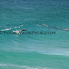 2016-03-14_0945_Shelly Beach Leaping Dolphin.JPG<br /> <br /> Leaping dolphins!