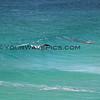 2016-03-14_0946_Shelly Beach Leaping Dolphin.JPG<br /> <br /> Pod surfing