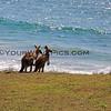 2016-03-14_0934_Moonee Beach Kangaroos.JPG<br /> <br /> Should we paddle out?