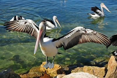 Weekend on Kangaroo Island