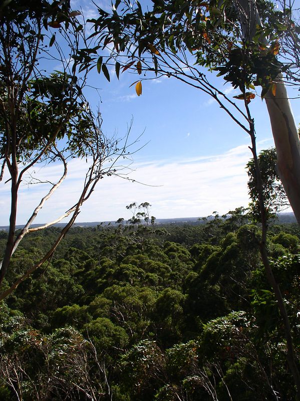 View from the Gloucester tree