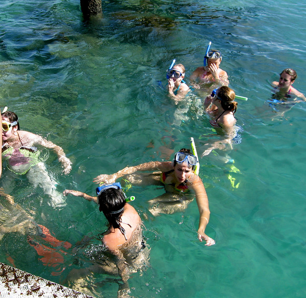 Was that a shark?  Gators snorkel at the Reef