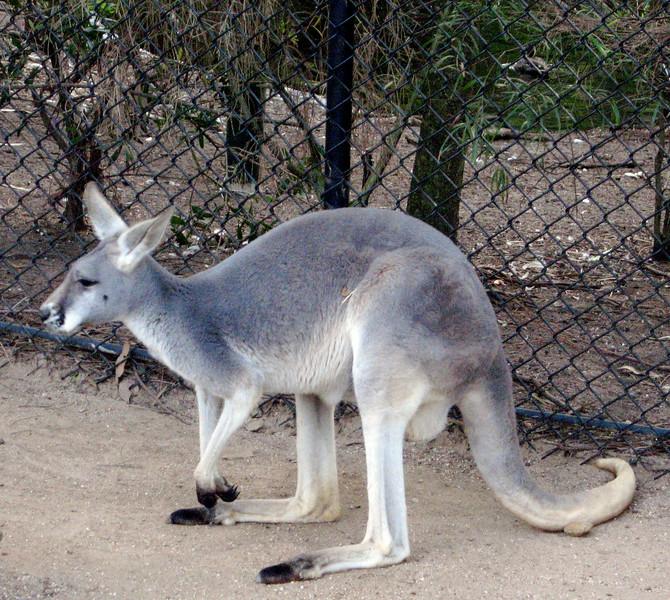Australian native, Taronga zoo