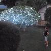 "The ""fairy lights"" tree"