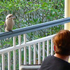 Often a visitor in the afternoons