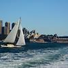 Sailboat at the Sydney Opera House