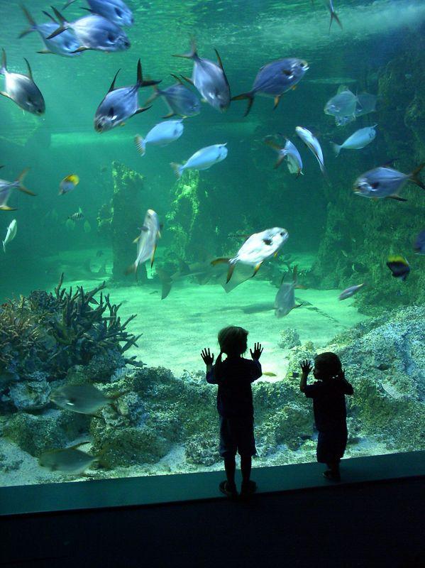 Kids looking at the aquarium