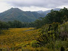 Between Cradle Mountain and Queenstown
