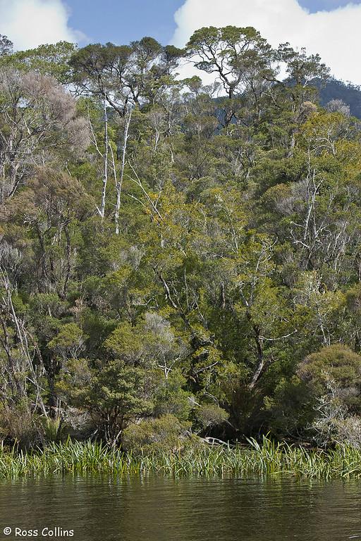 Strahan and the Gordon River, Tasmania, September 2008