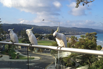 Particle Physics meeting in Lorne