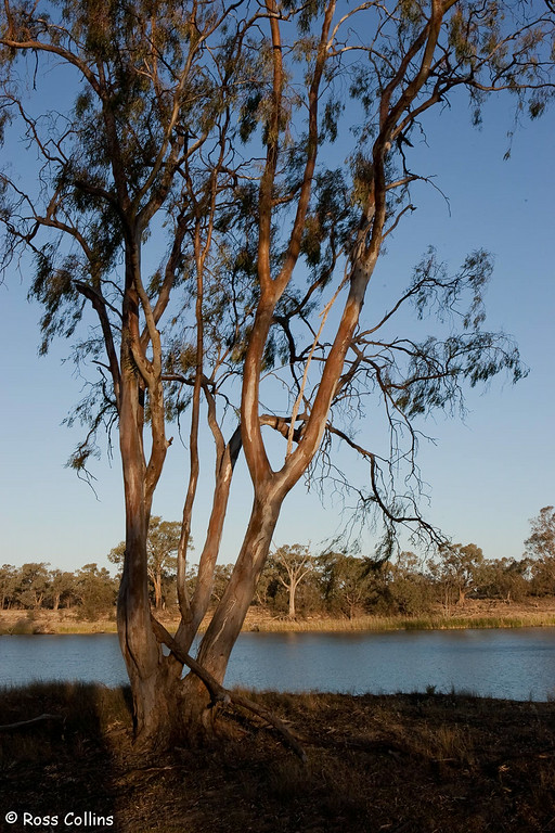 Mildura and District, NW Victoria/SW New South Wales, Australia, October 2006