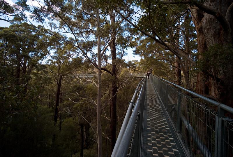 Treetop walk, Valley of the Giants