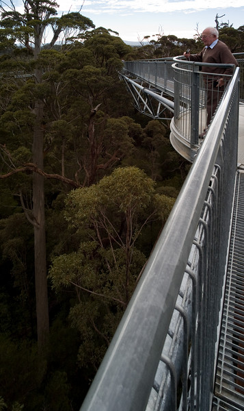 Treetop walk, Valley of the Giants.