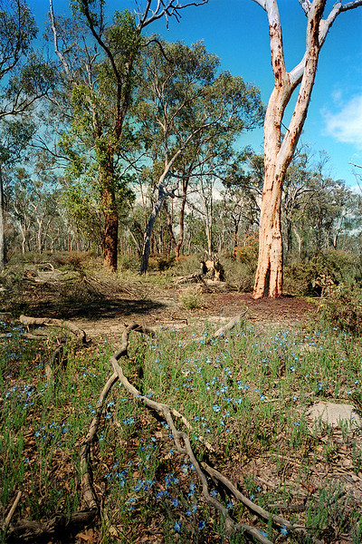 Dryandra forest, Oct/Nov 2003