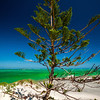 norfolk pine, indian ocean,