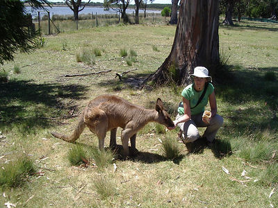 Tanya feeding another kangaroo.