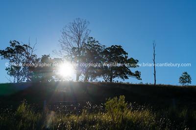 Sunburst with lens flare through silhouette trees