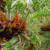 Daintree Rainforest. Port Douglas, Australia