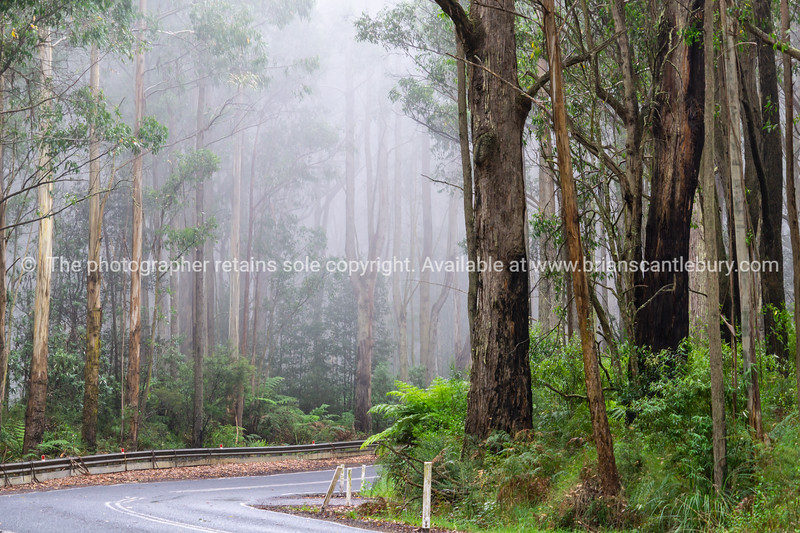 Driving through mist and forest on Great Ocean Road