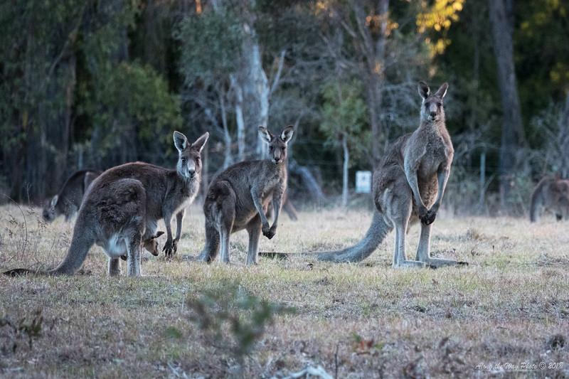 Australia-994
