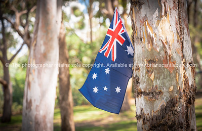 Australian flag on eucalyptus tree in bush