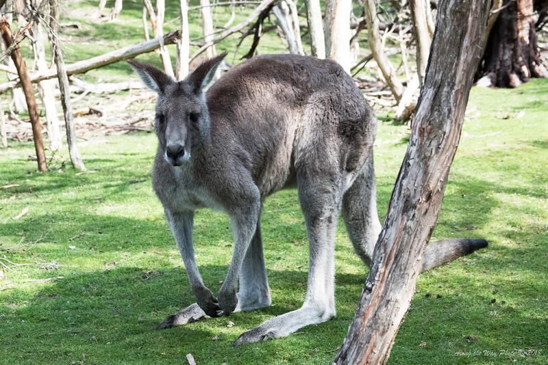 Australia-1155